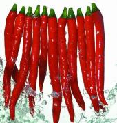 红 美 人 椒